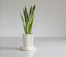 Pot pour plantes